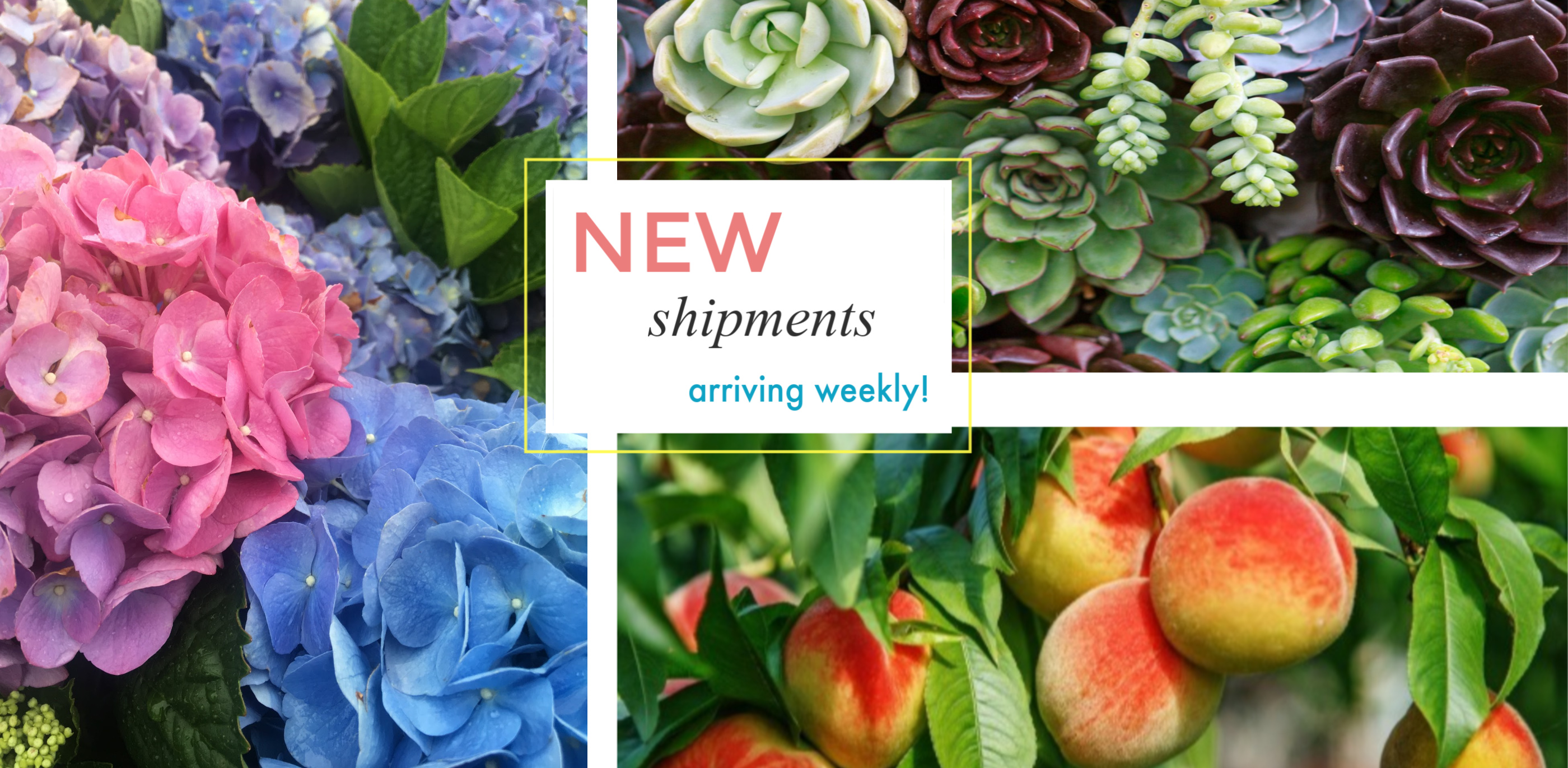 New Shipments